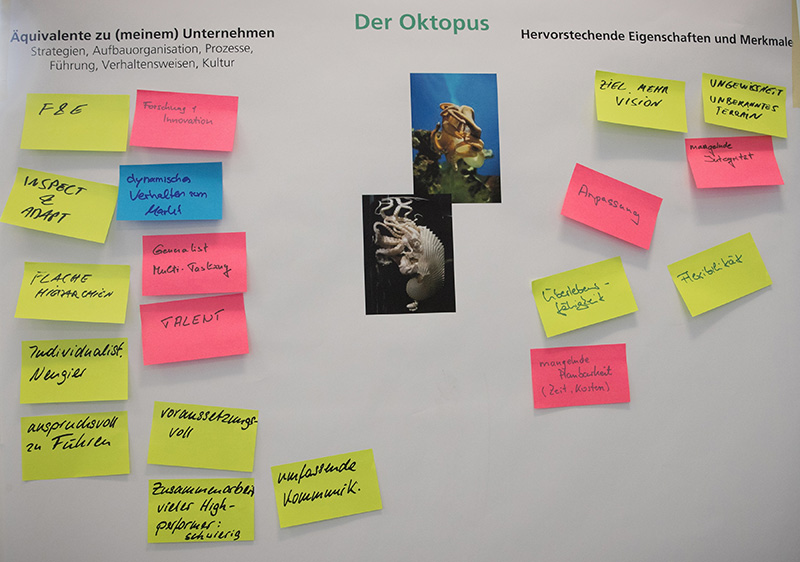 Oktopus-Handeln in den Unternehmen identifizieren